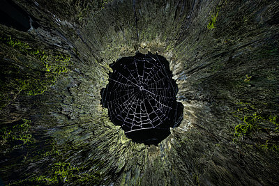 Directly below shot of spider web on tree stump - p1166m1489281 by Cavan Images