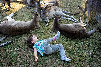 Australia, Brisbane, little girl lying on a meadow with group of tame kangaroos - p300m2070598 von Gemma Ferrando