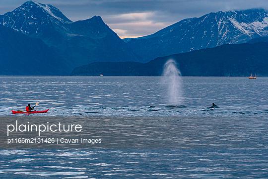Kayaking With Humpbacks - p1166m2131426 by Cavan Images