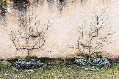 Darmstädter Herrengarten - p417m1129057 von Pat Meise