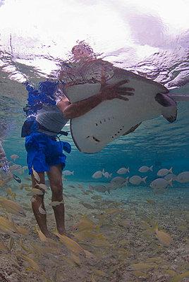 Diver holding stingray, Cozumel, Mexico, Caribbean, North America - p871m731926 by Antonio Busiello