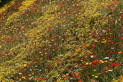 Flower field - p253m813548 by Oscar