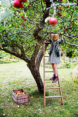 Girl picking apples - p312m2092015 by Anna Kern