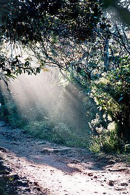 Sonnenstrahlen im Wald - p795m1045286 von Janklein