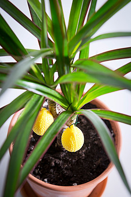 Houseplant with decoration - p1149m1162772 by Yvonne Röder