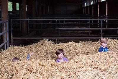 Bauernhof Urlaub - p1308m1143920 von felice douglas