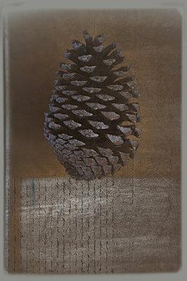 Fir cone still life - p1468m1527615 by Philippe Leroux