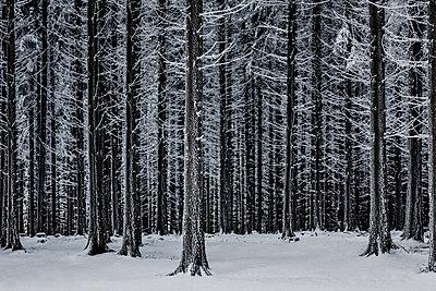 Verschneiter Wald bei Mont Pilat - p910m1467701 von Philippe Lesprit