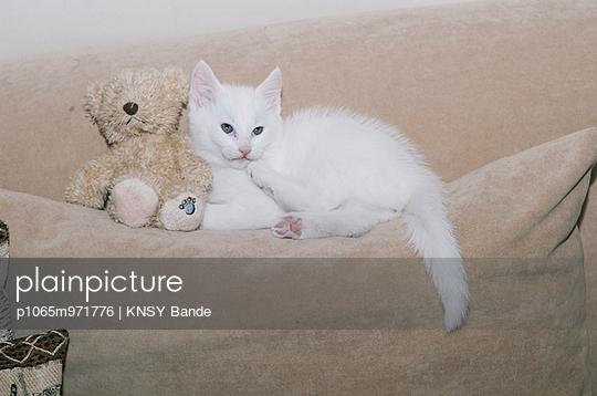 Katze und Teddybär auf einem Sofa - p1065m971776 von KNSY Bande