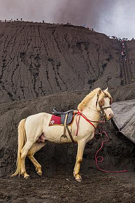 Ein Reitpferd vor dem Bromo Vulkan auf Indonesien - p1108m1158909 von trubavin