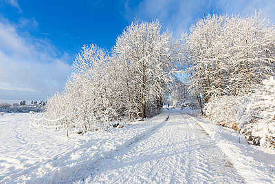 Rural road covered in snow in Jarfalla, Sweden - p352m1536584 by Calle Artmark
