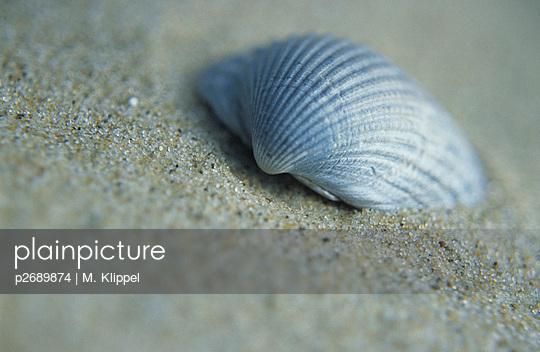 Fine - p2689874 by M. Klippel