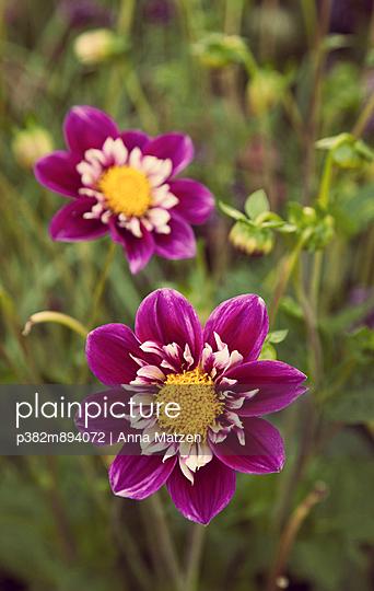 Blumen - p382m894072 von Anna Matzen