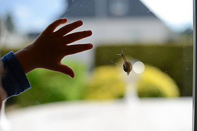 Snail on window and toddler hand - p1631m2217677 by Raphaël Lorand