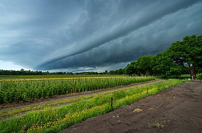 View of tree nursery and thunderstorm overhead - p429m1047045 by Mischa Keijser