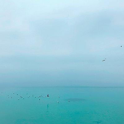Flock of birds landing on sea - p429m2019052 by Rehulian Yevhen