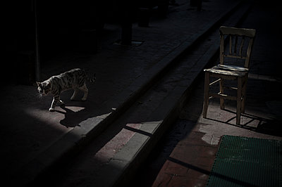 Cat walking between shadows and light - p1007m1134818 by Tilby Vattard