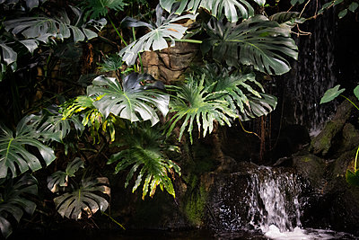 Two Oceans Aquarium, waterfall, tropical plants - p1640m2246222 by Holly & John