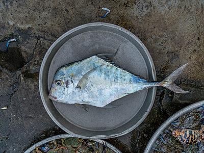 Fischmarkt - p393m1452263 von Manuel Krug