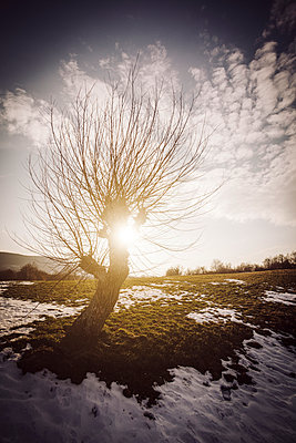 Tree silhouette in winter time with sun flare and blue sky - p968m952953 by roberto pastrovicchio