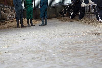 Tierhaltung - p1058m817142 von Fanny Legros