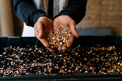 Hands holding variety of seeds over tray - p300m2273539 by VITTA GALLERY