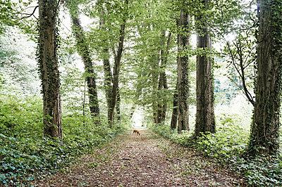 Avenue - p751m1584768 by Dieter Schwer