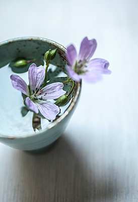 Forest flowers in bowl - p971m1451196 by Reilika Landen