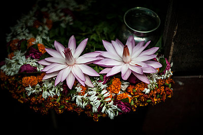 Offering with lotus flowers - p1007m1144429 by Tilby Vattard