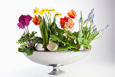 An arrangement of spring flowers, including daffodils and tulips - p301m730894f by Larry Washburn
