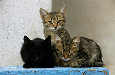 Cats in Greece - p3300473 by Harald Braun