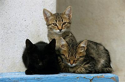 Katzen auf Santorini - p3300473 von Harald Braun