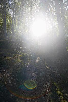 im Wald - p464m1550415 von Elektrons 08