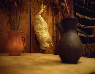 Toter Feldhase hängt in einer Hütte - p945m1480759 von aurelia frey