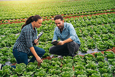 Man and woman with tablet and clipboard in lettuce field - p300m2156577 by Manu Padilla Photo
