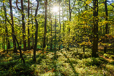 Summer forest - p312m1533504 by Mikael Svensson