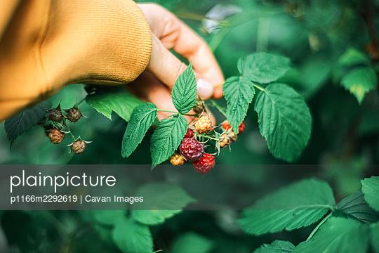 p1166m2292619 von Cavan Images