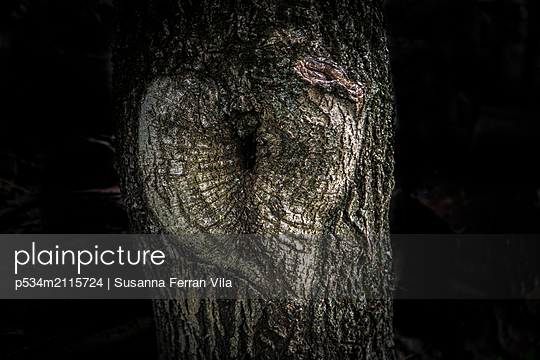 Tree trunk - p534m2115724 by Susanna Ferran Vila