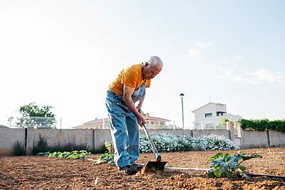 Senior man in denim overall working on farmland and weeding out earth with hoe - p300m2029469 by Josep Rovirosa