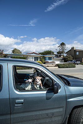 Dogs on front seats of car - p1134m1440757 by Pia Grimbühler