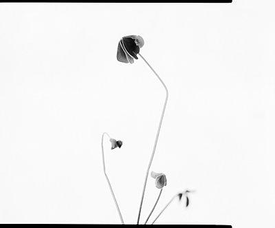 Filigree flower - p1532m2090289 by estelle poulalion
