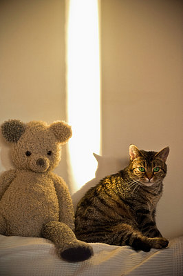 Cat and teddy bear on sofa - p1418m1572018 by Jan Håkan Dahlström