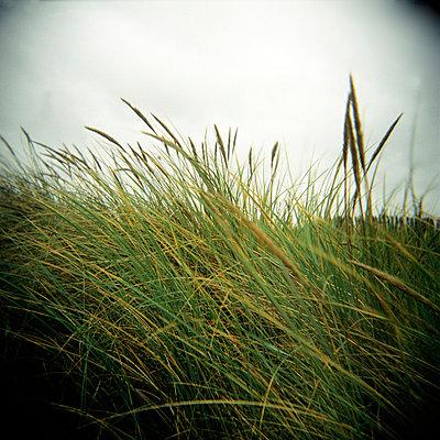 Strandgras - p5679775 von Christophe Boete