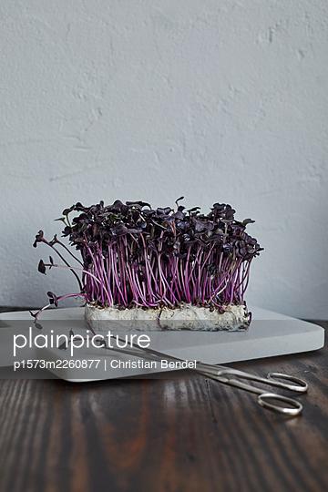 Violette Rettichkresse - p1573m2260877 von Christian Bendel
