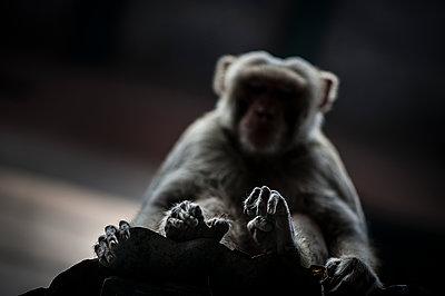 Monkey fingers - p1007m1144393 by Tilby Vattard