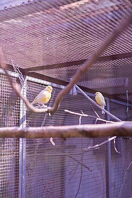 Vogelkäfig - p1075m1515651 von jocl