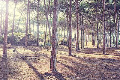 View of summer forest - p312m1532992 by Oscar Wettersten