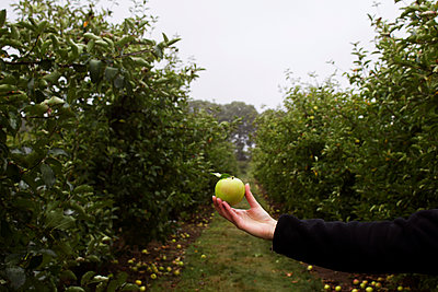 Cropped image of woman holding green apple in orchard - p1166m1193820 by Cavan Images