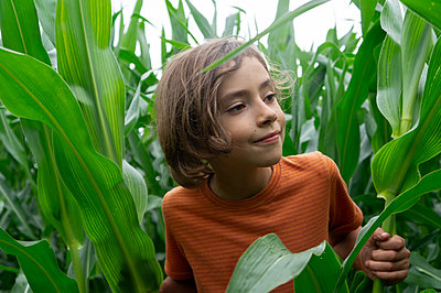smiling boy curiously peer over the tall green cornplants - p1166m2290228 by Cavan Images