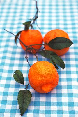 Orangen am Zweig - p1259m1065896 von J.-P. Westermann